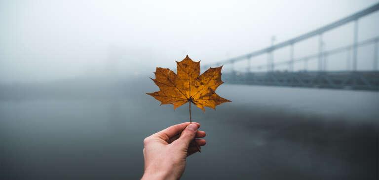 Caída de pelo en otoño, ¿cuándo tengo que empezar a preocuparme?